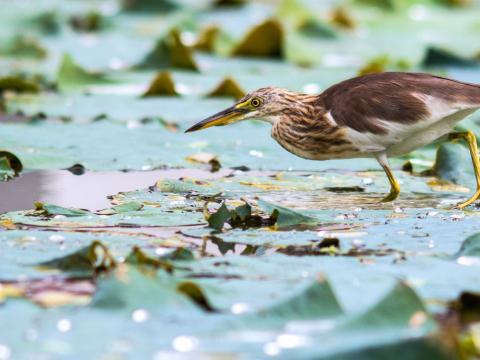 エバーグレーズ国立公園の画像 p1_9