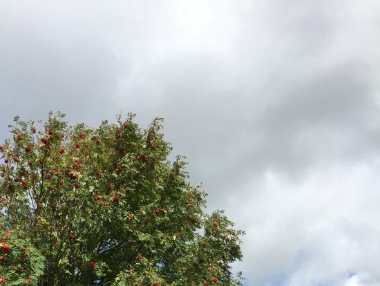 ニューグレンジの画像 p1_26