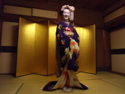 The maiko posing in front of a gilt screen