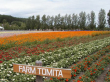 Flowery fields at Farm Tomita