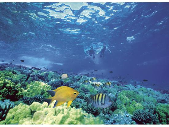 7:00 Molokini Snorkel (6 Hours) 2 Snorkel Spots