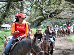 ハワイで乗馬!大自然に囲まれながら乗馬体験 クアロア牧場
