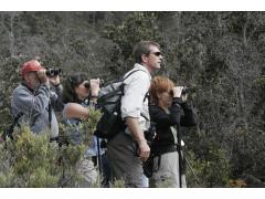 ハワイ島 ジャングル探索エコツアー バードウォッチング アドベンチャー<英語ガイド>