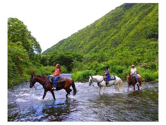 Hawaii Horse Riding Big Island