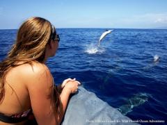 ハワイ島 ボートを貸切って自分流にアレンジ!シュノーケリングツアー<日本語ガイド>