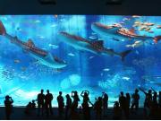 The main tank of the Churaumi Aquarium