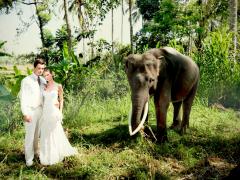 象に乗ってフォトウェディング!inエレファントサファリパーク