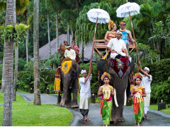 象に乗ってウェディング!inエレファントサファリパーク