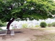 【屋根裏】イ・ガクとパク・ハが、木の下のベンチで語り合った丘2