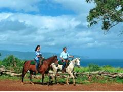 ノースショア(ハレイワ)観光 好きなアクティビティを選ぶ(乗馬・ハイキングなど) ウキウキツアー