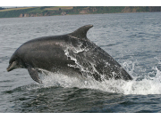 3 Chanonry Point