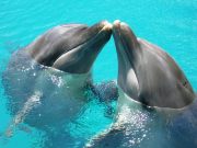 dolphinkiss(1)
