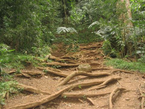 Hike_Trail3