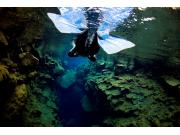 Snorkeling -Into the Blue 3 ellithor.com