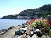 sausalito-shore