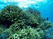 サンゴ (1)