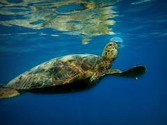 Turtle_Canyon