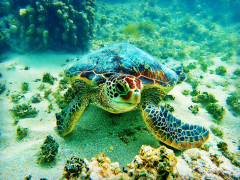 Turtle_Sassy