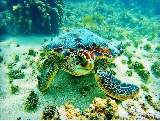 Hawaii Coral Reef Snorkeling Big Island