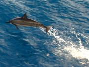 Dolphin_Jump2