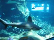 SLP_SharkTank