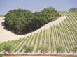 パソロブレス ブドウ畑
