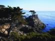 Monterey Lone Cypress