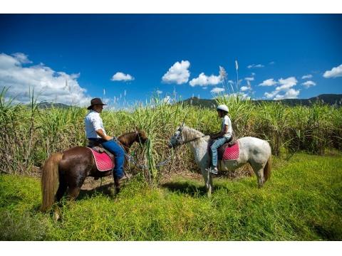 乗馬ツアー 熱帯雨林や湖のほとりを散歩<日本語ガイド>by Blazing Saddles Adventure