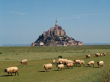 2-saint-michel-mount-sheep