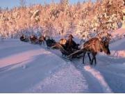 reindeersafari1