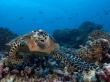 07-Rangiroa-Diving-CopyrightEricCheng