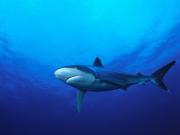 10-Rangiroa-Diving-CopyrightSylvainGirardot