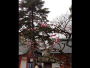 北野天満宮 (3)