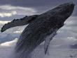 whale-safari1
