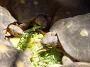 20131108080044_90023_turtle_tsimbazaza