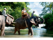 Elephant Cross river