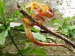 20131122084540_95220_Chameleon(1)