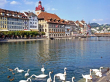 Lucerne with swans