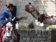1-aigles-des-remparts-provins