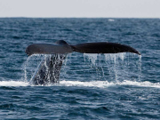 whale_watch01