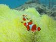 美ら海体験 (5)