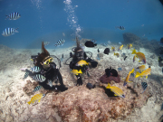 美ら海体験 (6)