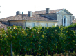 Vue des toits de la maison avec vignes