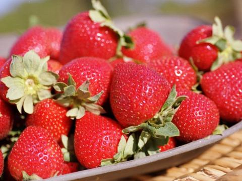 Sunny Ridge Strawberries (348, 348S) (1)