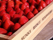 Sunny Ridge Strawberries (348, 348S)