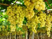 プーリアワイン