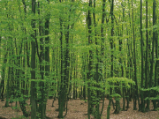 ウィーンの森