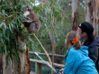 Koala Conservation Centre (384, 324, 387, 322P)
