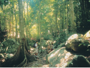 fitzroy_rainforest