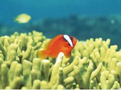 かわいい熱帯魚達も楽しめます!